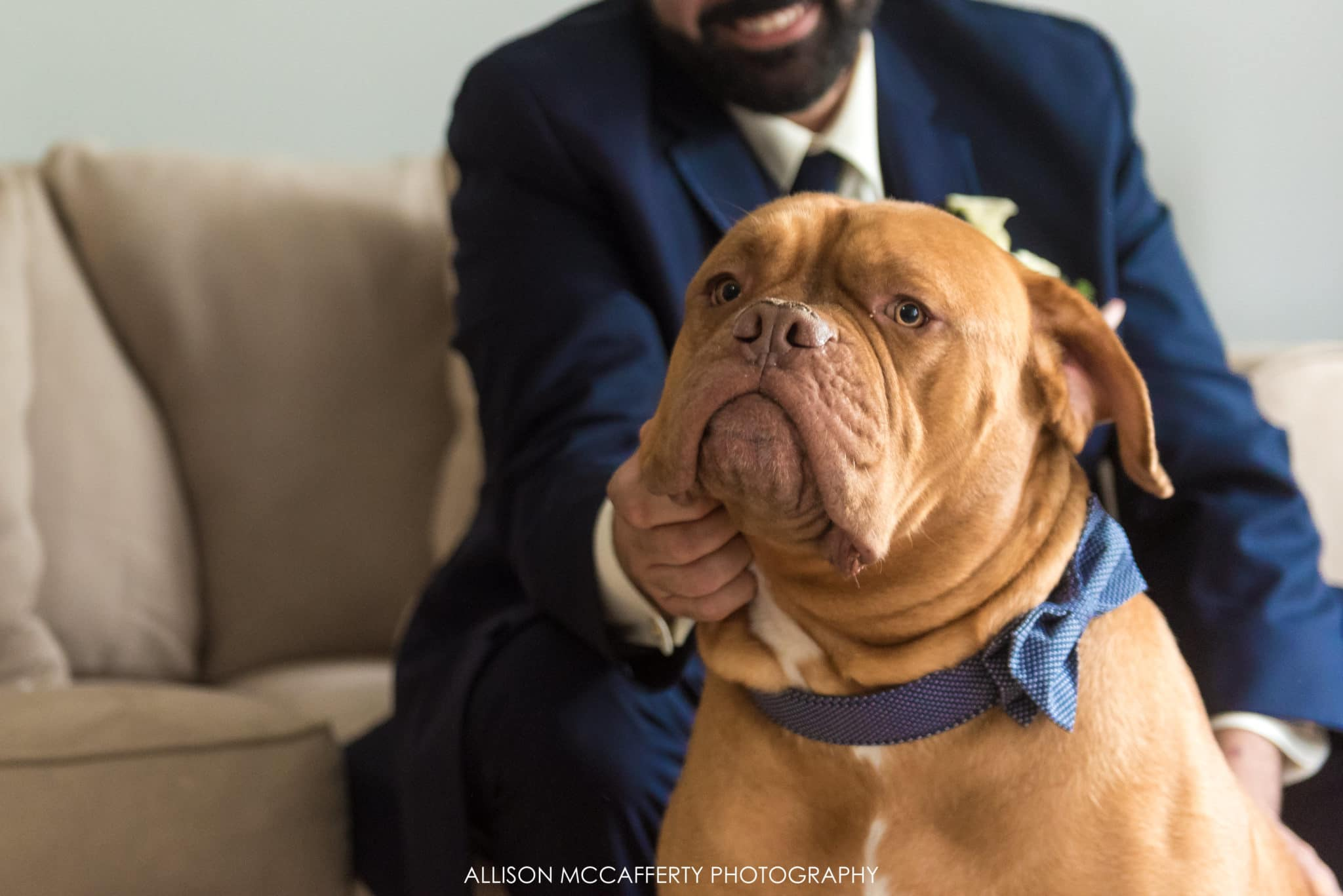 dog with bow tie on wedding day