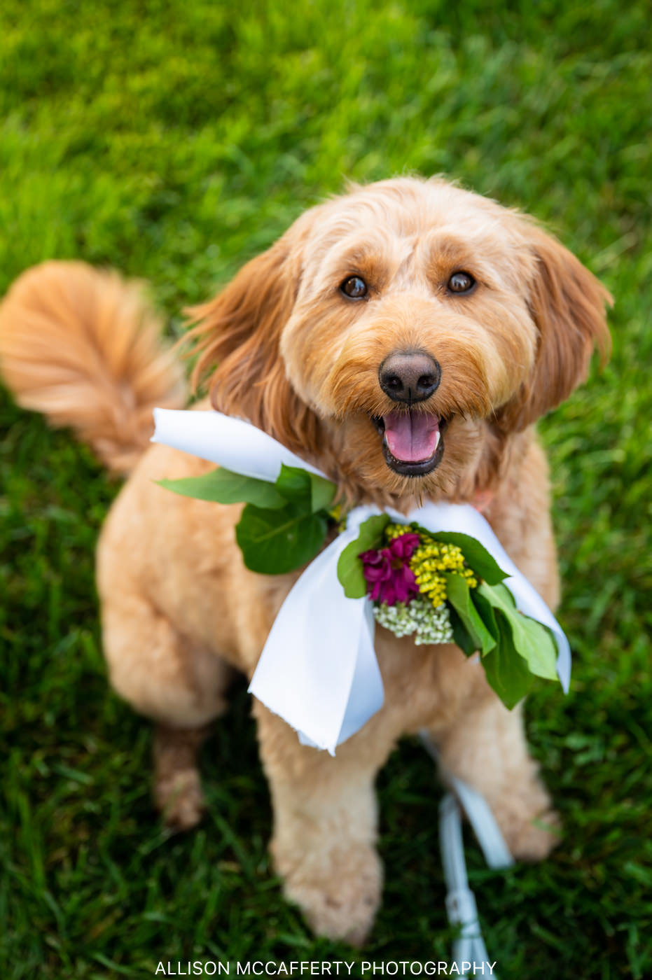 Wedding Flower Dog